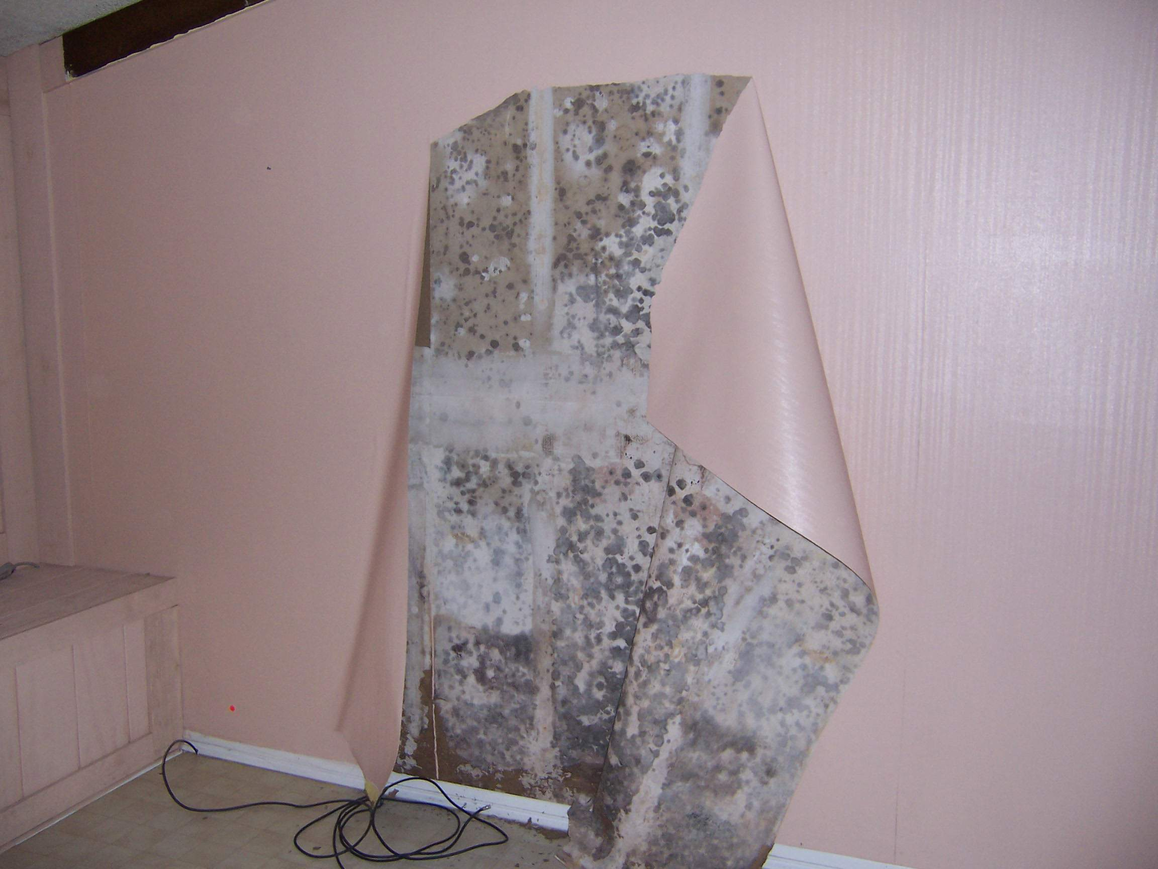 Identify Remediate Prevent Mold Behind Under Wallpaper